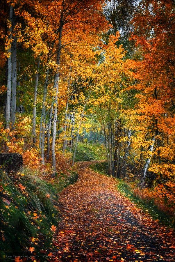 🍁本日は秋の聖地巡礼特別祈願祭🌾&🌙幸波動ワンネスヒーリング皆様のお声掲載💕