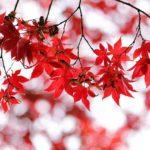 10月18日秋の聖地巡礼追加特別祈願祭終了のご報告
